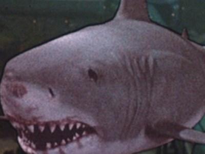 Tubarão 3 (Jaws 3D) só não é esquecível pelos péssimos efeitos especiais!