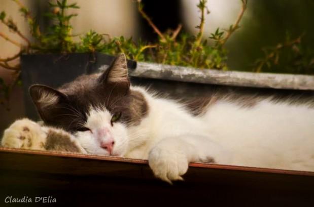 Fotografando Pets - Fotografia DG