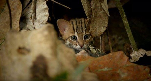 O menor gato do mundo é ridiculamente fofo e temos fotos para provar 02