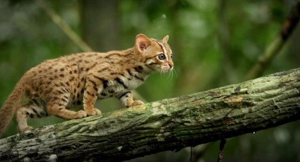 O menor gato do mundo é ridiculamente fofo e temos fotos para provar 04