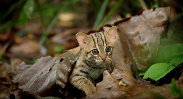 O menor gato do mundo é ridiculamente fofo e temos fotos para provar 07