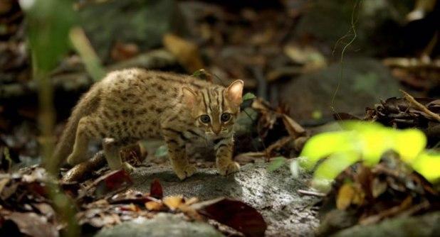 O menor gato do mundo é ridiculamente fofo e temos fotos para provar 08
