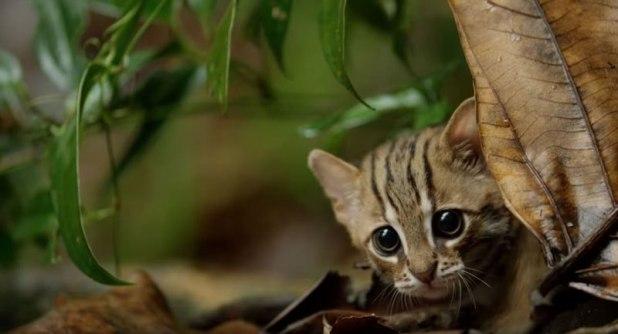 O menor gato do mundo é ridiculamente fofo e temos fotos para provar 09