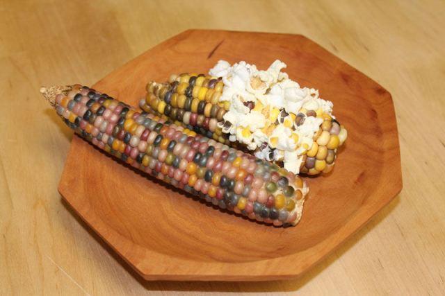 Uma verdadeira festa para os olhos: o milho arco-íris 06