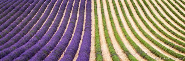 Hipnóticas fotos da colheita dos campos de lavanda 08