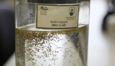 Ao longo de um ano, foram confirmados 25.960 casos de chicungunha, transmitida pelo Aedes aegypti (Foto: Alexandre Gondim/JC Imagem)