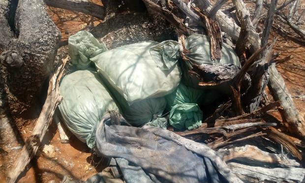 Droga foi encontrada em propriedade no Sítio Jardim, em Belém do São Francisco / Foto: divulgação/Polícia Federal