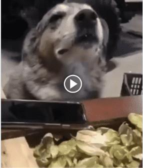Esse cachorro está curtindo a maior vibe