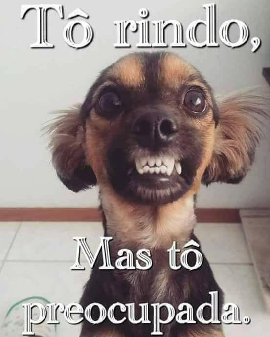 memes divertidos de cachorro