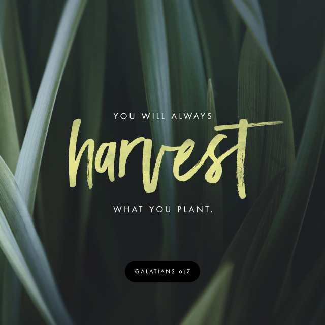 Galatians 6:7-8 NLT