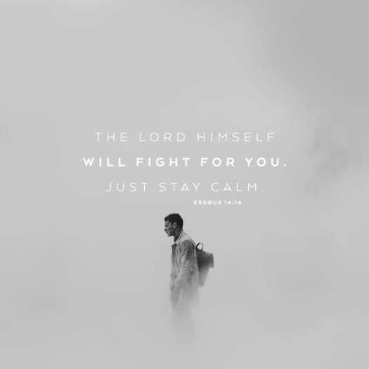 Exodus 14:14 NLT
