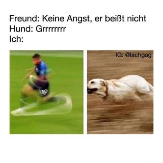 Terrier Beisst Fuhrer Jagderleben De