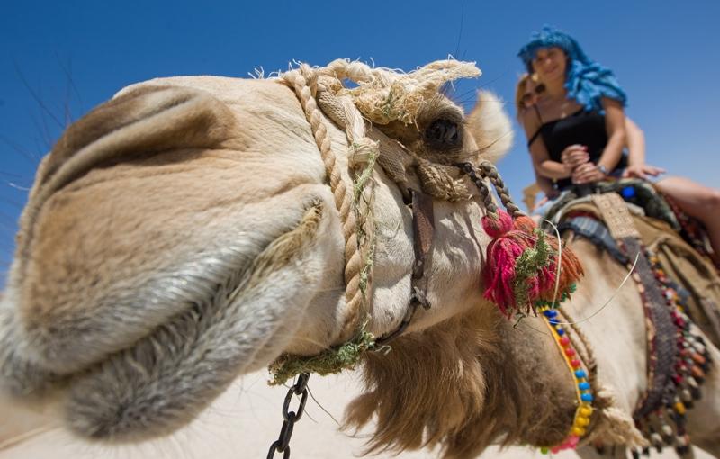 Familiereis EGYPTE KORT - 9 dagen; Speurtocht naar de Oudheid