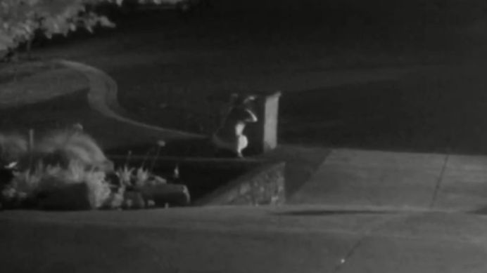 CCTV captured the woman loitering in the yard for several minutes. (Victoria Police)