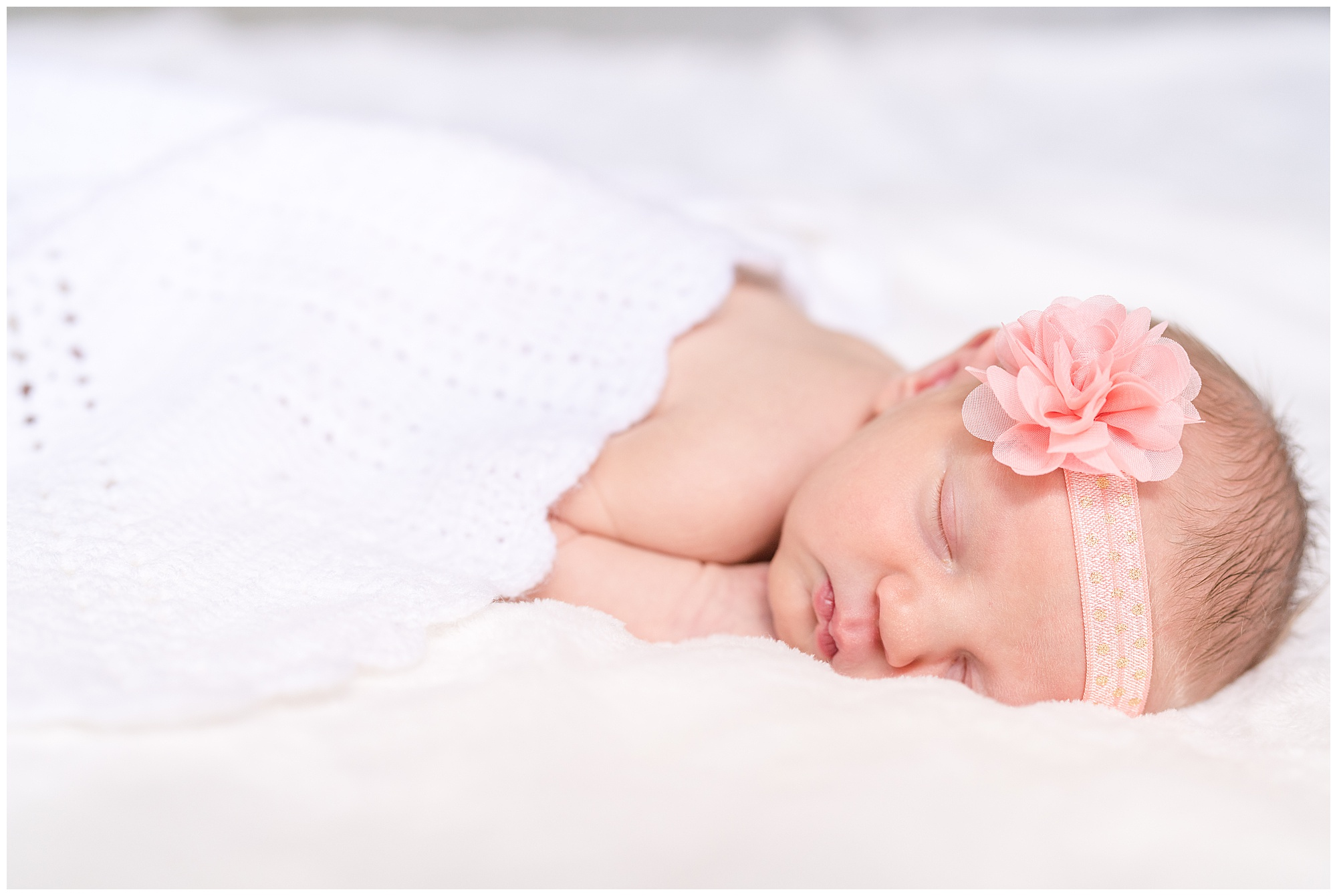 Alexandria newborn photography