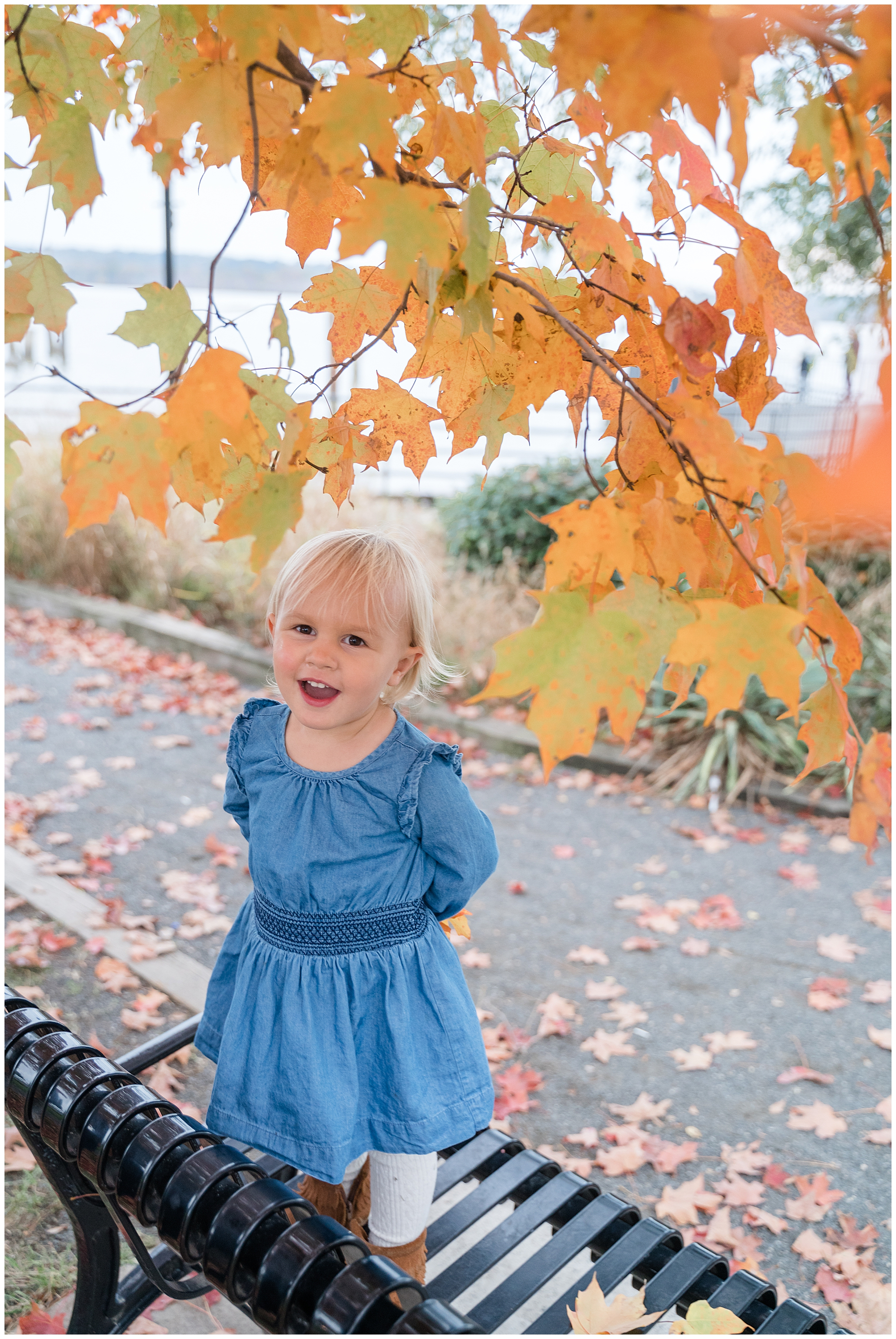 A young blonde girl in a blue dress stands on a bench underneath yellow leaves during a fall family session in Alexandria, Virginia.