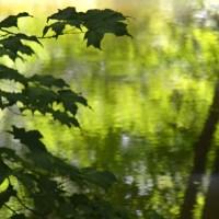 Summer Green Reflection
