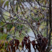 Fall Morning Web