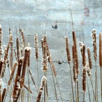 Bullrushes and Brick