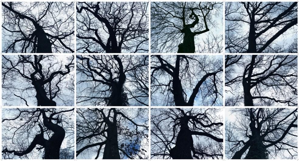 13_AB16531_Bäume1020
