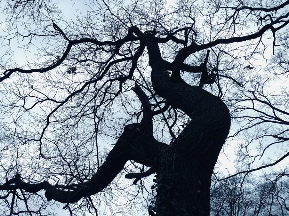 Baumansichten im Winter, Schlosspark Babelsberg