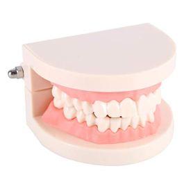 1 Pezzo PVC Adulti Denti Replica Modello Medico Dentale Strumenti Di Insegnamento Realistico