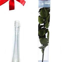 floristikvergleich.de Rosen-te-amo 1 Liebes-Geschenkset, Eine Echte konservierte Rose in Rot, Mindestens 3 Jahre Ohne Wasser Haltbar, Dazu Eine