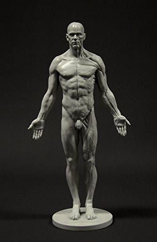 Figura anatómica masculina:Figura de 28 cm (gris).
