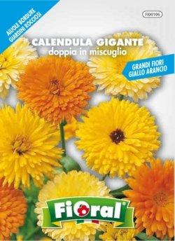 Sementi da fiore di qualità in bustina per uso amatoriale (CALENDULA GIGANTE DOPPIA IN MISCUGLIO)