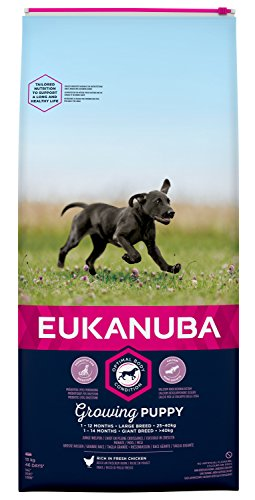 Eukanuba Puppy Trockenfutter für große Rassen – Qualitatives Welpen Futter mit verbesserter, neuer Rezeptur für Hunde im Alter von 1-14 Monaten in der Geschmacksrichtung Huhn – 1 x 15kg Beutel