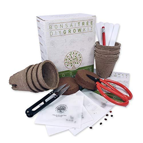 Edgics Kit De Árbol Bonsái | Set Cultivo Con 4 Paquetes De Semillas Variadas de Bonsái | Iniciación y Cuidados De Jardinería Para Interior y Exterior | Idea Regalo Original Para Hombre y Mujer