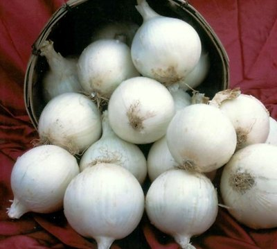 bianco dolce spagnolo 100 + Non-GMO Cipolla Seed - Barletta Rosso Borgogna Walla Walla Spagnolo