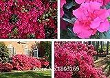 ASTONISH SEEDS: 10 colores Rododendro semillas en macetas semillas del árbol de la azalea biji, variedades completa 200 partículas/bolsa de la planta Bonsai Garden