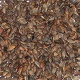 vegherb 500 Semilla de Pino Negro Bonsái Japonesa Paquete Pinus Thunbergii