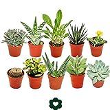 Set of 10 different succulent plants - 5,5cm pot im Set
