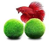LUFFY Marimo Moss Balls - Estéticamente hermoso y crea un ambiente saludable - Ecológico, bajo mantenimiento y frena el crecimiento de algas - Camarones y caracoles Los aman