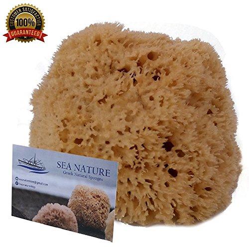Éponge de mer naturelle Mer Nature Marque 5–15,2cm Nid d'abeille type de bain pour le corps et le visage de nettoyage Idéal pour bébé Bain–solide et durable Destinés