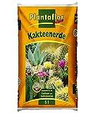 Mezcla Para Cactus Plantaflor Plus