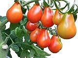 Tomate Cerveny Fik 10 Samen -Sehr süß-