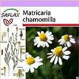 SAFLAX - Camomilla - 300 semi - Matricaria chamomilla