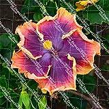 FARMERLY Paquete de Semillas 100pcs / Bolsa de la Planta de Hoja caduca arbusto Bonsai Familia de Plantas de jardín decoración de jardín Planta en Maceta: 5