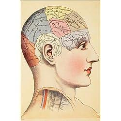 Posterlounge Cuadro Sobre Lienzo 20 x 30 cm: Map of The Human Brain