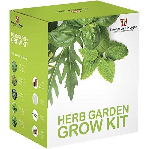 Herb Garden Semi Kit Scatola Regalo - 5 Tradizionale Tasty Herbs To Grow ; Basilico, Prezzemolo, Aglio, Coriandolo & Rocket Semi By Thompson & Morgan