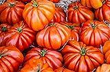 Lot de 25 Graines Potageres - Tomate Coeur de Boeuf