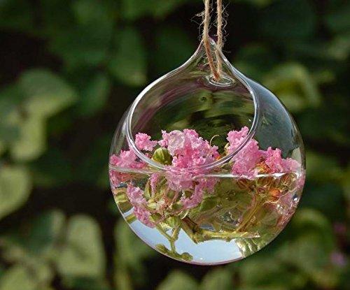 Haodou florero de cristal Jarrón hidropónico Forma de bola clara decoración de cristal de la planta de la chuchería florero decoración Contenedor hidropónico de terrarios