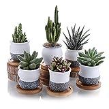 T4U Pot de Succulent en Céramique avec Plateau en Bambou 7CM Lot de 6, Cactus Plante Planteur Cache Pot Jardinière Contenant Décoration de Maison Bureau Cadeau pour Anniversaire Mariage