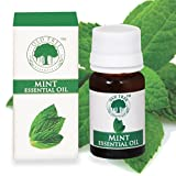 Old Tree Peppermint Essential Oil 100 Percent Pure and Natural, 15ml