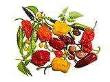 Chili-Samen Mix Habanero Ultra Scharf (5 Arten zu jeweils 10 Samen) + Anpflanzanleitung