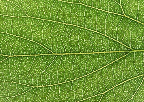 com-four® 6-teiliges Gartenset mit grünen Griffen - Doppelhäckchen, Fugenkratzer, Kleingrubber, Kleinbesen,Blumenkelle und Unkrautstecher (6-teilig Gartenset)