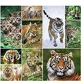 """Tierpostkarten-Set Tiere / Katzen: """"WILDKATZEN: Tiger, Luchse, Geparden, Jaguar"""" (11 Postkarten) - ideal für Sammler, Postcrossing oder als Lehrmaterial in Biologie"""